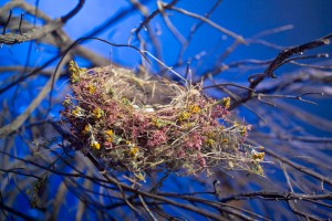Bird's nest, made with flowers